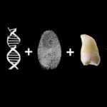 dnA dENTAL fINGERPRINT